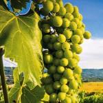 """Protiv poslovnog urušavanja  """"Vinograda"""" radi bezuslovne privatizacije"""