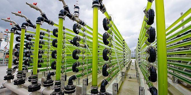 Uzroci i posledice groznice za biogorivima